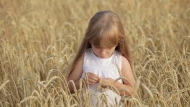 Cute little girl standing in wheat — Stock Video