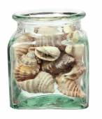 Seashells in Bottle — Stock Photo