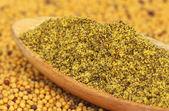 Ground Mustard — Stock Photo