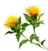 Safflower used as a food additive — Stock Photo