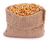 Wheat in a sack bag — Stock Photo
