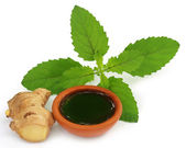 Medicinal holy basil  with extract — Stock Photo