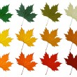 Постер, плакат: Sycamore leaf Set in different color shades