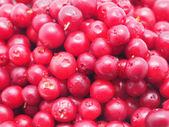 Closeup di mirtilli rossi — Foto Stock