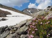 Mountain Hibiny — Stock Photo