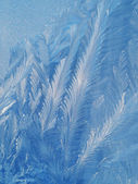 Frost patterns on glass — Stock Photo