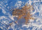 Droog gras in de sneeuw — Stockfoto