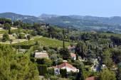 Le Castellet 法国的葡萄园 — 图库照片