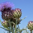 Blooming artichoke — Stock Photo #61641317