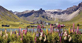 Lake of Tignes and flowers in France — Stock Photo