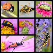 Photos mosaic of insects — Stock Photo