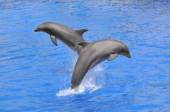 Dolphins jumping out of water — Stock Photo