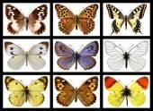 Mosaic photos of butterflies — Stock Photo