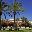 Palm trees at Cannes in France — Stock Photo #68477837