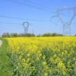 Rapeseed field with electric pylons — Stock Photo #68585651
