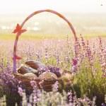 Basket with sweet-stuff in purple lavender flowers — Stock Photo #76706149