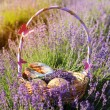 Basket with cookies in purple lavender flowers — Stock Photo #76706309