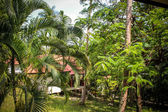 Beautiful bungalow resort in jungle, Koh Samui, Thailand — Stock Photo