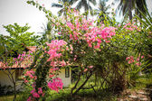 Beautiful bungalow resort in jungle with flowers, Koh Samui, Thailand — Stock Photo
