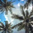 Branches of coconut palms under blue sky and clouds — Stock Photo #52920445