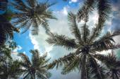 Branches of coconut palms under blue sky and clouds — Stock Photo