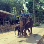 KOH SAMUI, THAILAND 2 april 2013, Thai man riding elephant with his baby in Samui jungle — Stock Photo #53127805