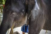 Close up portrait of a African elephant — Stock Photo