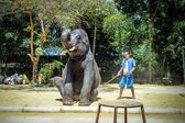 THAILAND, KOH SAMUI, 4 APRIL 2013 Elephant show in jungle — Stock Photo