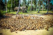 Stack of the coconuts in farm for coconut oil industry — Stockfoto