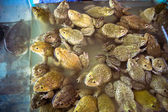 Frogs sold in fresh market Thai — Zdjęcie stockowe