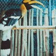 Exotic bird in cage — Stock Photo #55374275