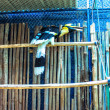 Exotic bird  in cage — Stock Photo #55374297