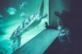 Boy watching a sea turtle in an aquarium — Stock Photo