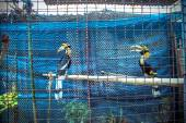 Exotic birds behind cells — Stockfoto