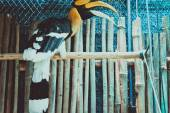 Exotic bird in cage — Stock Photo