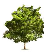 Árvore verde. Vector — Vetor de Stock