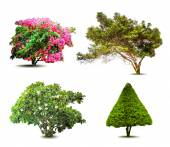Collection Of Trees isolated On White Background. Vector — Vetorial Stock
