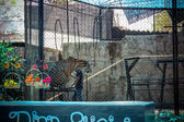 Fire show tigers in the zoo on Samui — Stock Photo