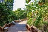 木とベンチ ガーデン — ストック写真