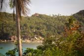 Trees on the Sea Coast on the island — Stock Photo