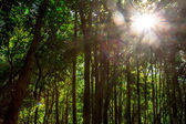 Nature green wood sunlight backgrounds. — Stock Photo