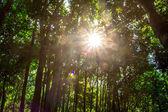 Sfondi di natura verde e legno del sole. — Foto Stock
