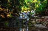 Waterfall in tropical forest in Samui — 图库照片