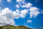 View of  trees against sky — Stok fotoğraf
