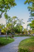Path under the trees in park — Stock Photo