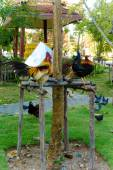 Chickens on the grass and wooden stick — 图库照片