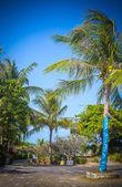 Pathway with palm tree to Samui Beach — Stock Photo