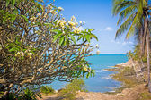 Tropical coast in Samui with stones and thai flower frangipani — Stockfoto