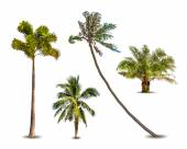 Different tropical palm trees. Vector — Stockvector