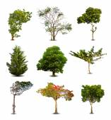 Collection Of Trees isolated On White Background. Vector — ストックベクタ